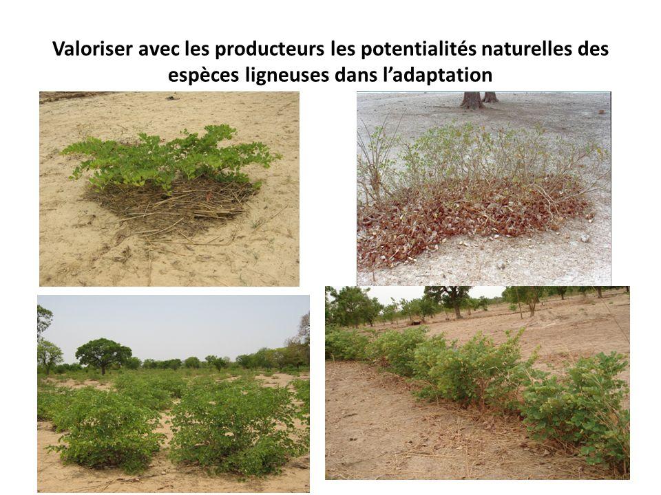 Valoriser avec les producteurs les potentialités naturelles des espèces ligneuses dans ladaptation