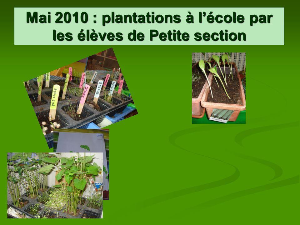 Mai 2010 : plantations à lécole par les élèves de Petite section