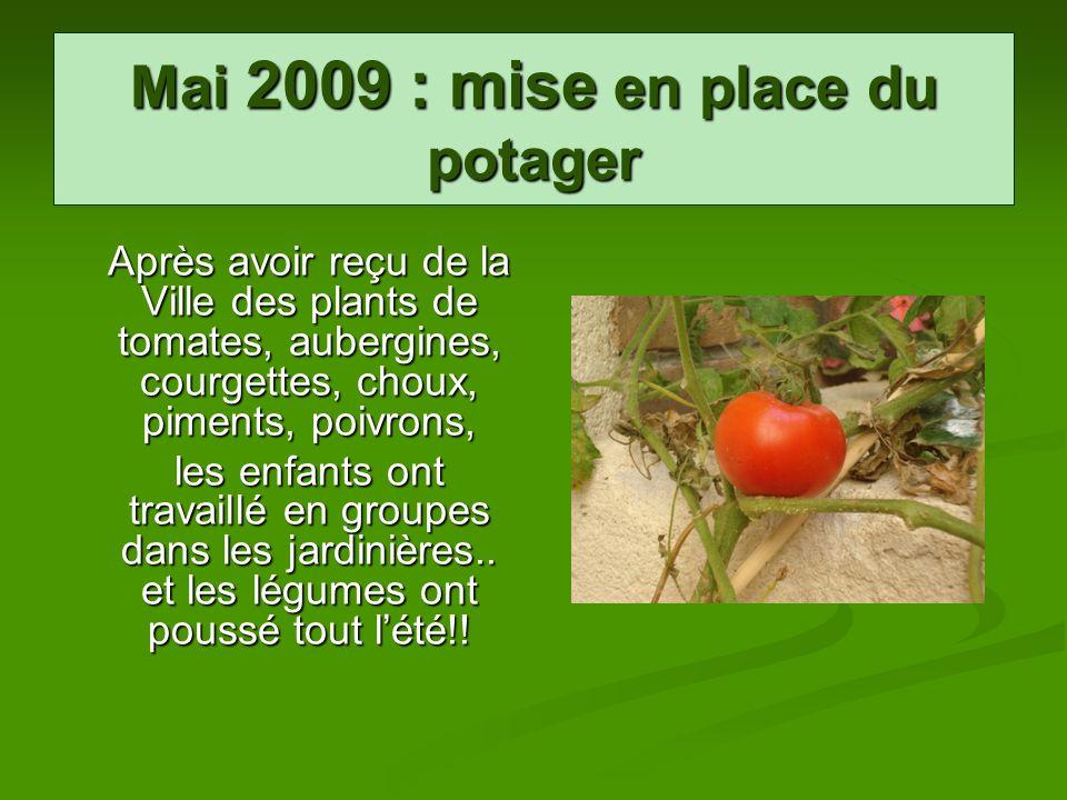 Mai 2009 : mise en place du potager Après avoir reçu de la Ville des plants de tomates, aubergines, courgettes, choux, piments, poivrons, les enfants