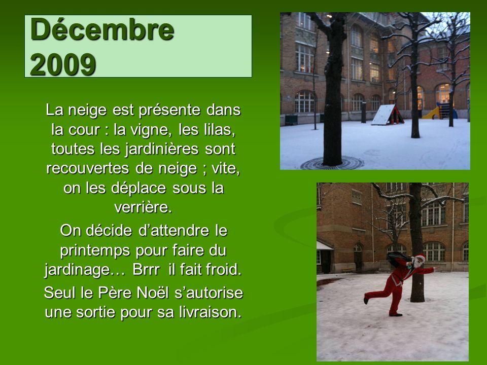 Décembre 2009 La neige est présente dans la cour : la vigne, les lilas, toutes les jardinières sont recouvertes de neige ; vite, on les déplace sous l