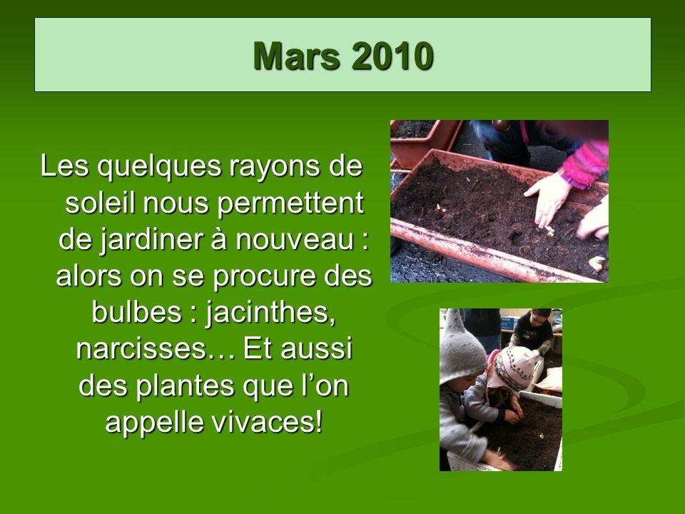 Mars 2010 Les quelques rayons de soleil nous permettent de jardiner à nouveau : alors on se procure des bulbes : jacinthes, narcisses… Et aussi des pl