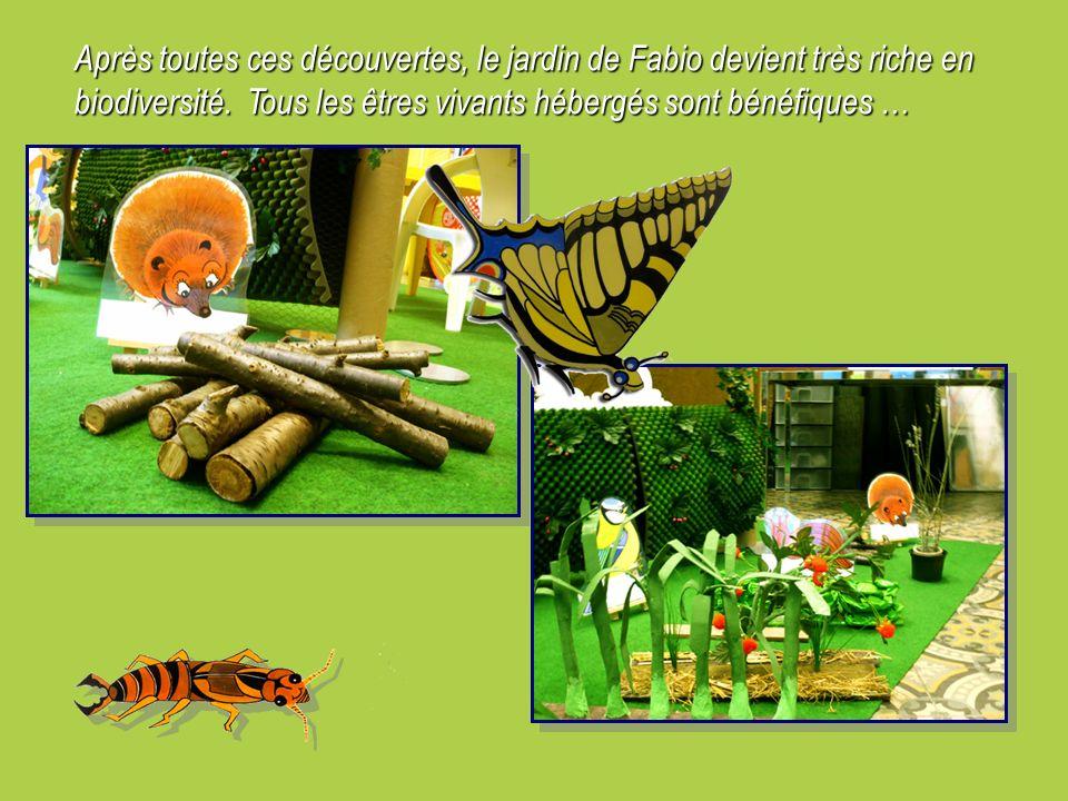 Après toutes ces découvertes, le jardin de Fabio devient très riche en biodiversité. Tous les êtres vivants hébergés sont bénéfiques …