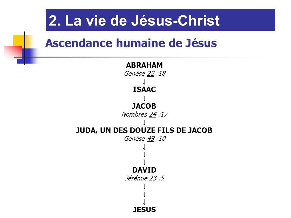 ABRAHAM Genèse 22 :18 ISAAC JACOB Nombres 24 :17 JUDA, UN DES DOUZE FILS DE JACOB Genèse 49 :10 DAVID Jérémie 23 :5 JESUS Ascendance humaine de Jésus
