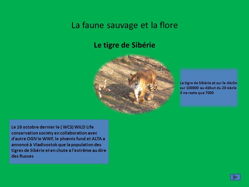 La faune sauvage et la flore Le tigre de Sibérie Le 16 octobre dernier le ( WCS) WILD Life conservation society en collaboration avec dautre OGN le WW
