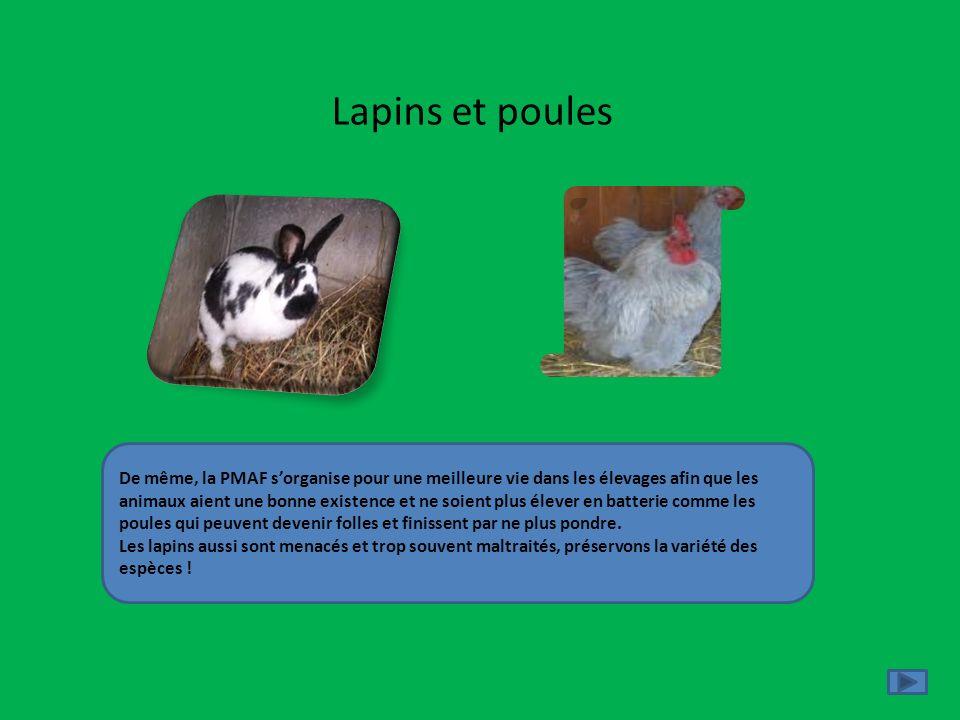 Lapins et poules De même, la PMAF sorganise pour une meilleure vie dans les élevages afin que les animaux aient une bonne existence et ne soient plus