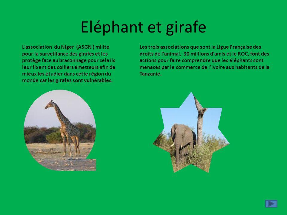 Eléphant et girafe Les trois associations que sont la Ligue Française des droits de lanimal, 30 millions damis et le ROC, font des actions pour faire