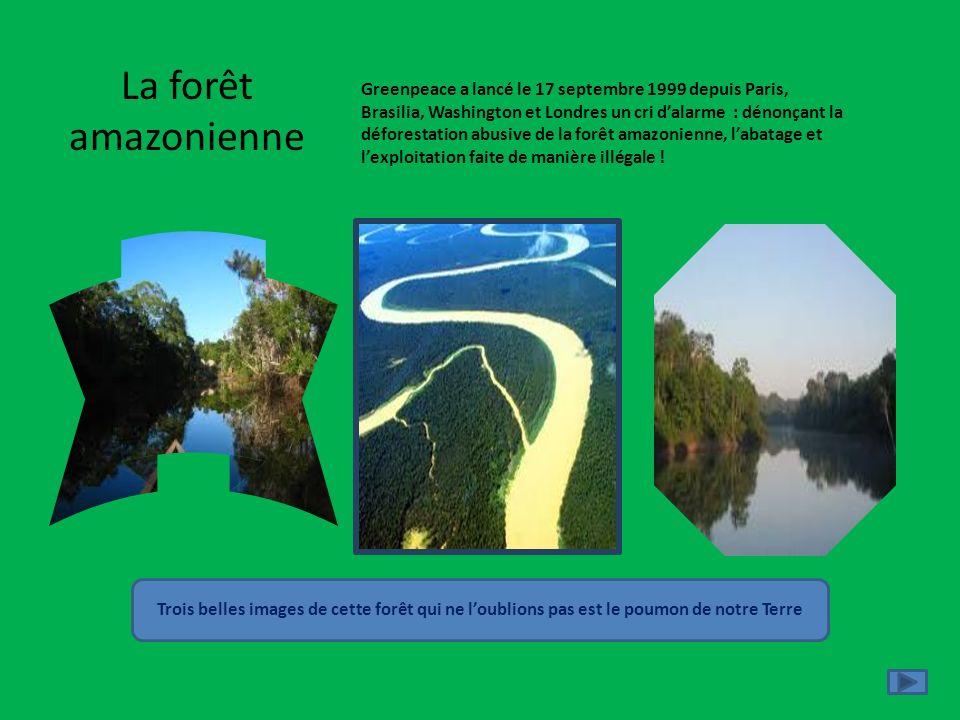 La forêt amazonienne Greenpeace a lancé le 17 septembre 1999 depuis Paris, Brasilia, Washington et Londres un cri dalarme : dénonçant la déforestation
