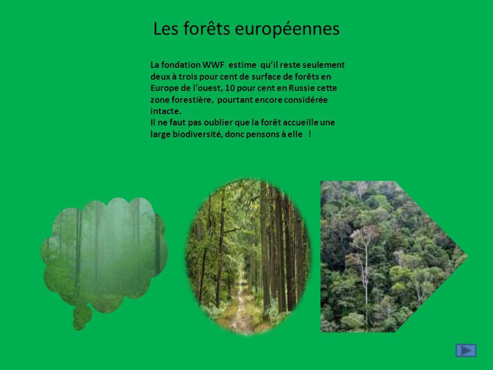 Les forêts européennes La fondation WWF estime quil reste seulement deux à trois pour cent de surface de forêts en Europe de louest, 10 pour cent en R