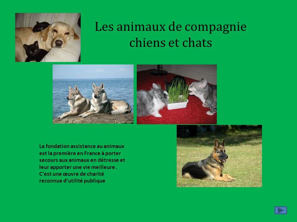 Les animaux de compagnie chiens et chats La fondation assistance au animaux est la première en France à porter secours aux animaux en détresse et leur