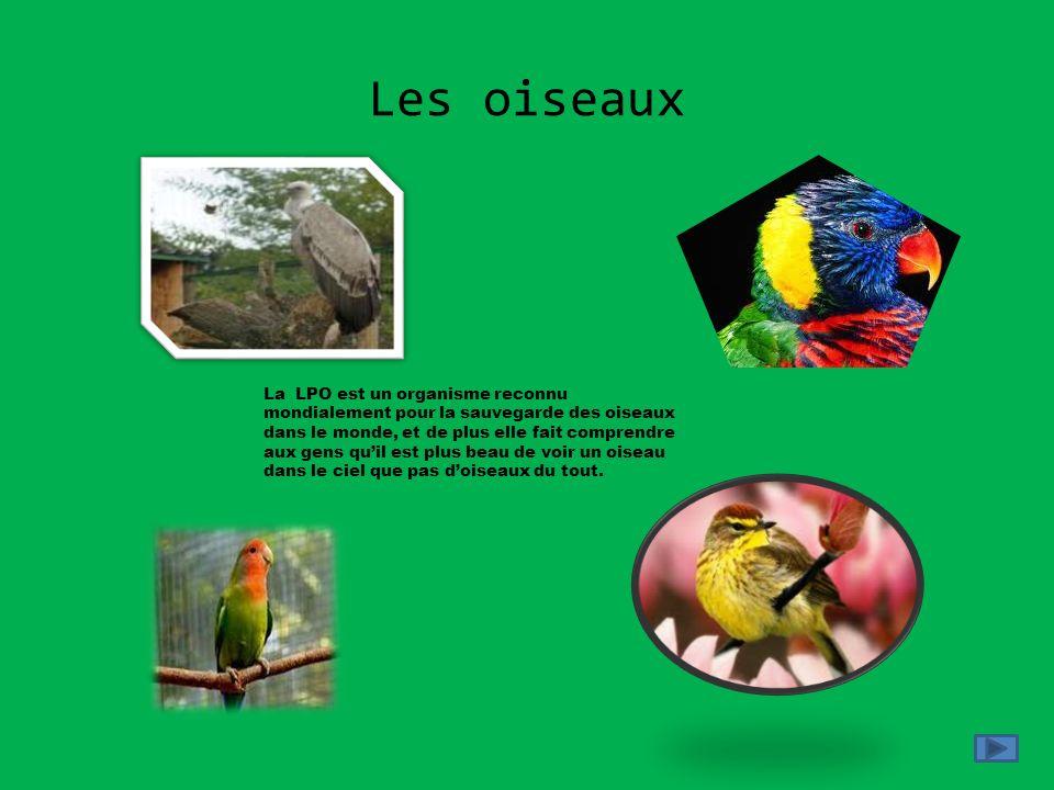Les oiseaux La LPO est un organisme reconnu mondialement pour la sauvegarde des oiseaux dans le monde, et de plus elle fait comprendre aux gens quil e