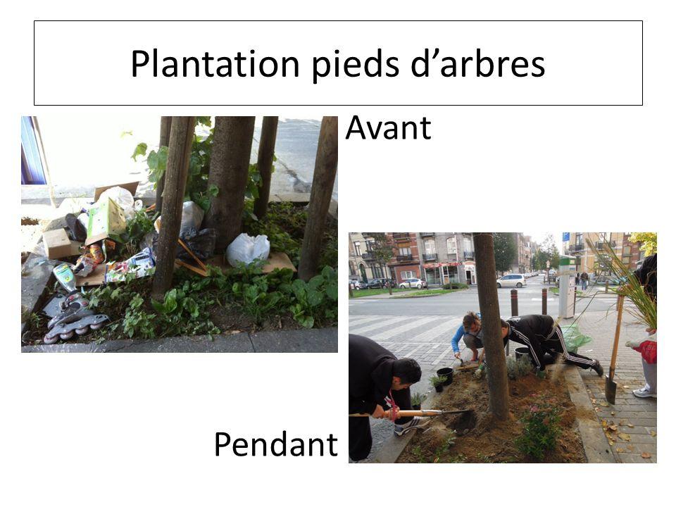Plantation pieds darbres Avant Pendant