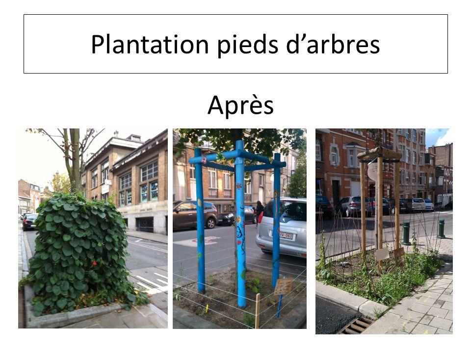 Plantation pieds darbres Après
