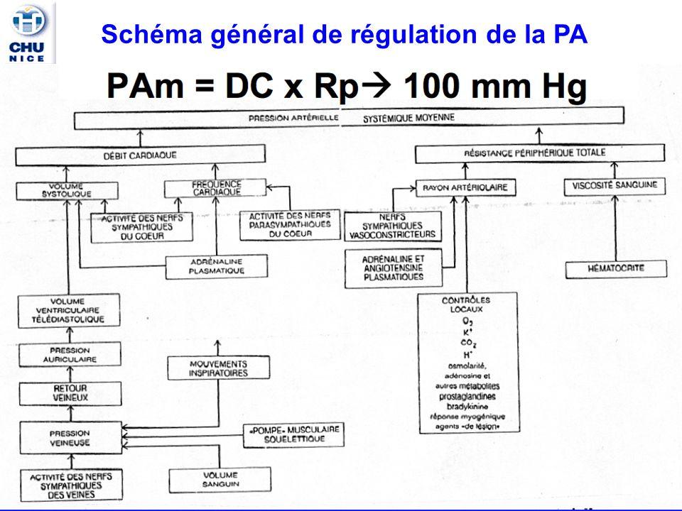 Pôle PHARMACIE K.MULLER 9 Mécanismes physiologiques de régulation de la PA PA= DC(débit cardiaque) X R(résistances périphériques) HTA R La PA est maintenue dans les limites normales grâce aux mécanismes contrôlant les facteurs hémodynamiques(DC et R): Le système nerveux autonome (SNA) Les facteurs hormornaux Le système rénine-angiotensine