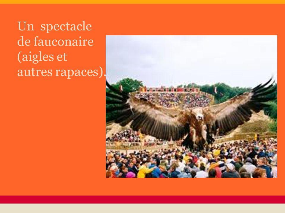 Un spectacle de fauconaire (aigles et autres rapaces).