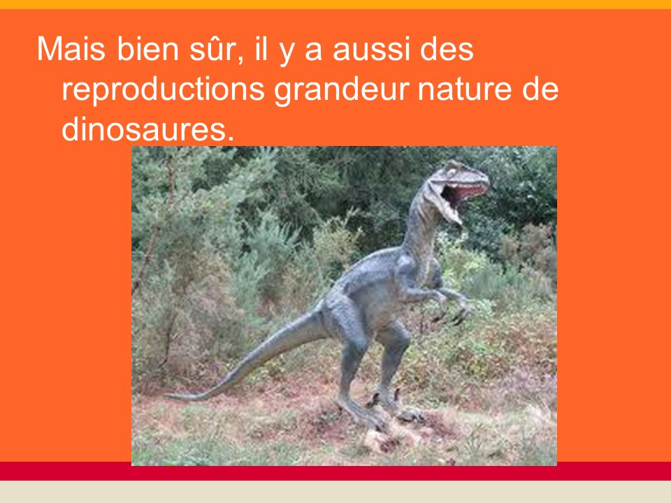Mais bien sûr, il y a aussi des reproductions grandeur nature de dinosaures.