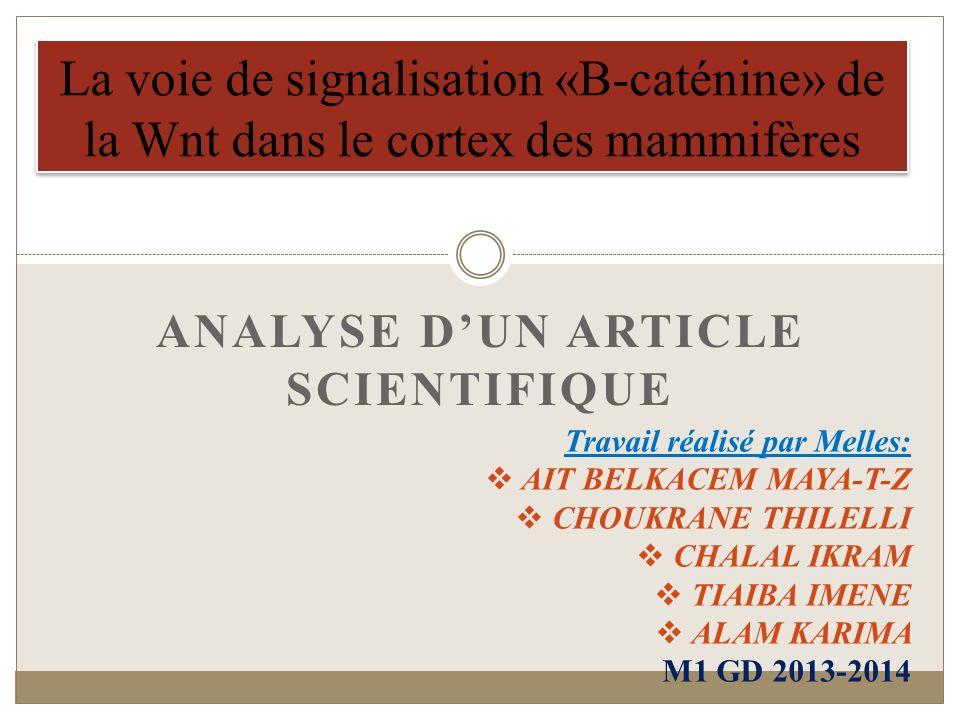 ANALYSE DUN ARTICLE SCIENTIFIQUE La voie de signalisation «B-caténine» de la Wnt dans le cortex des mammifères Travail réalisé par Melles: AIT BELKACE