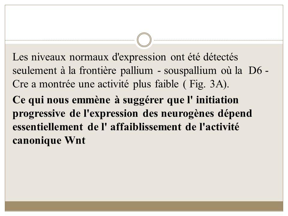 Les niveaux normaux d'expression ont été détectés seulement à la frontière pallium - souspallium où la D6 - Cre a montrée une activité plus faible ( F