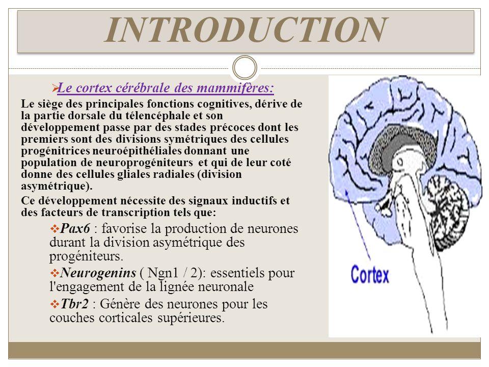 Le cortex cérébrale des mammifères: Le siège des principales fonctions cognitives, dérive de la partie dorsale du télencéphale et son développement pa