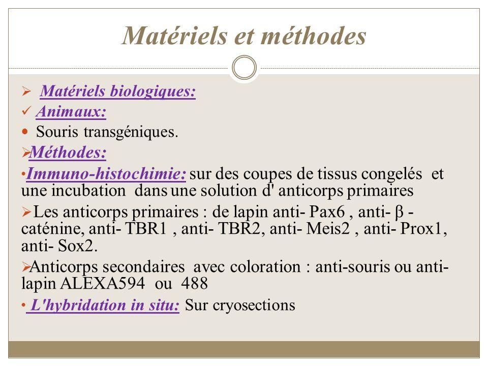 Matériels et méthodes Matériels biologiques: Animaux: Souris transgéniques. Méthodes: Immuno-histochimie: sur des coupes de tissus congelés et une inc