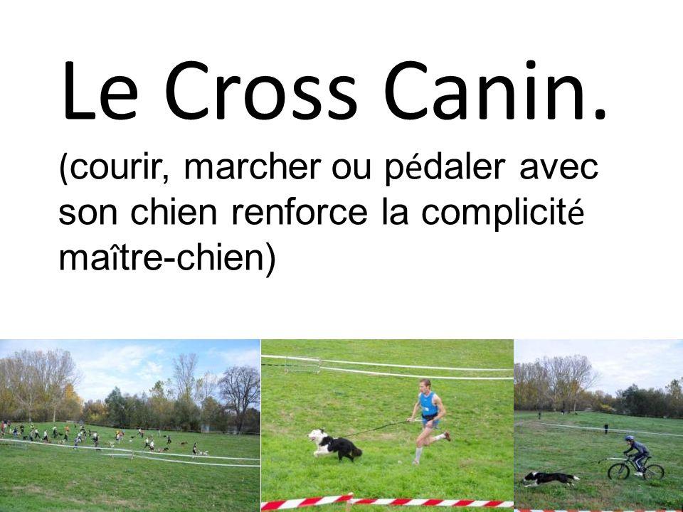 2 Le Cross Canin. ( courir, marcher ou p é daler avec son chien renforce la complicit é ma î tre-chien)