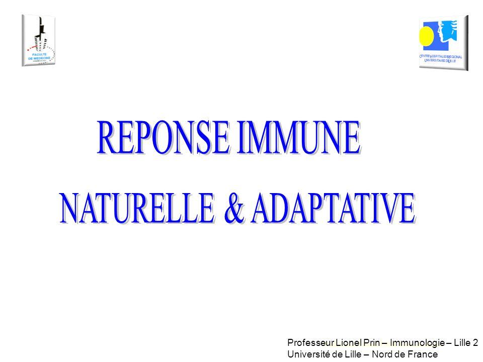 Professeur Lionel PRIN, Immunologie Professeur Lionel Prin – Immunologie – Lille 2 Université de Lille – Nord de France