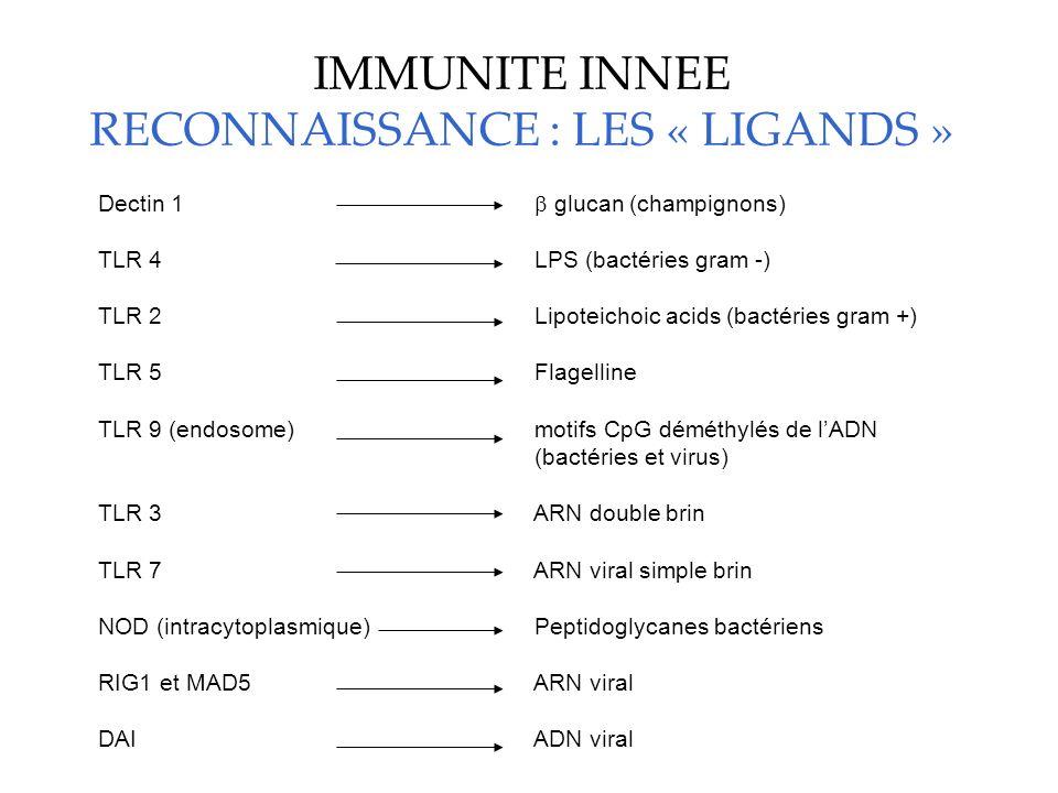IMMUNITE INNEE RECONNAISSANCE : LES « LIGANDS » Dectin 1 glucan (champignons) TLR 4 LPS (bactéries gram -) TLR 2 Lipoteichoic acids (bactéries gram +)