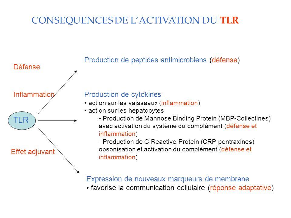 CONSEQUENCES DE LACTIVATION DU TLR Production de peptides antimicrobiens (défense) Production de cytokines action sur les vaisseaux (inflammation) action sur les hépatocytes - Production de Mannose Binding Protein (MBP-Collectines) avec activation du système du complément (défense et inflammation) - Production de C-Reactive-Protein (CRP-pentraxines) opsonisation et activation du complément (défense et inflammation) Expression de nouveaux marqueurs de membrane favorise la communication cellulaire (réponse adaptative) TLR Défense Inflammation Effet adjuvant