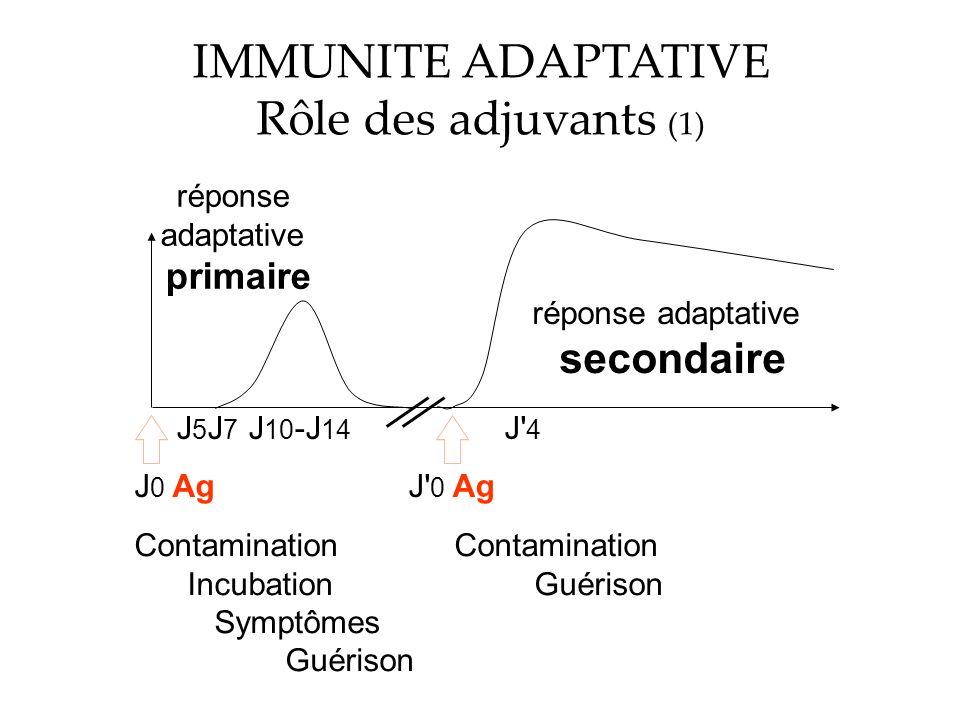 IMMUNITE ADAPTATIVE Rôle des adjuvants (1) réponse adaptative primaire réponse adaptative secondaire J 0 AgJ 0 Ag Contamination Incubation Guérison Symptômes Guérison J5J7J5J7 J 10 -J 14 J 4