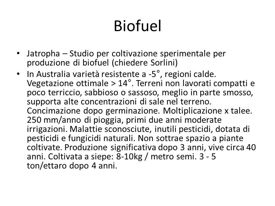 Biofuel Jatropha – Studio per coltivazione sperimentale per produzione di biofuel (chiedere Sorlini) In Australia varietà resistente a -5°, regioni calde.