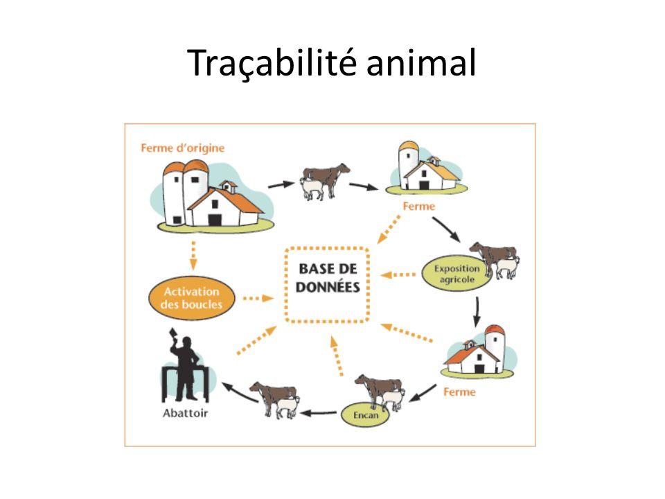 Traçabilité animal