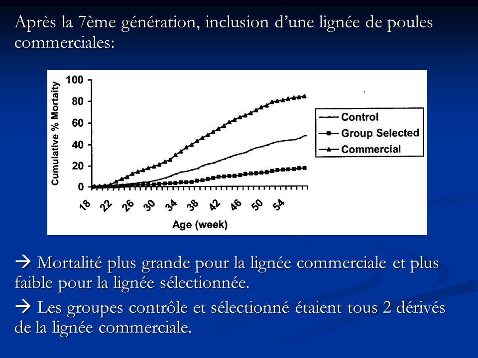 Après la 7ème génération, inclusion dune lignée de poules commerciales: Mortalité plus grande pour la lignée commerciale et plus faible pour la lignée