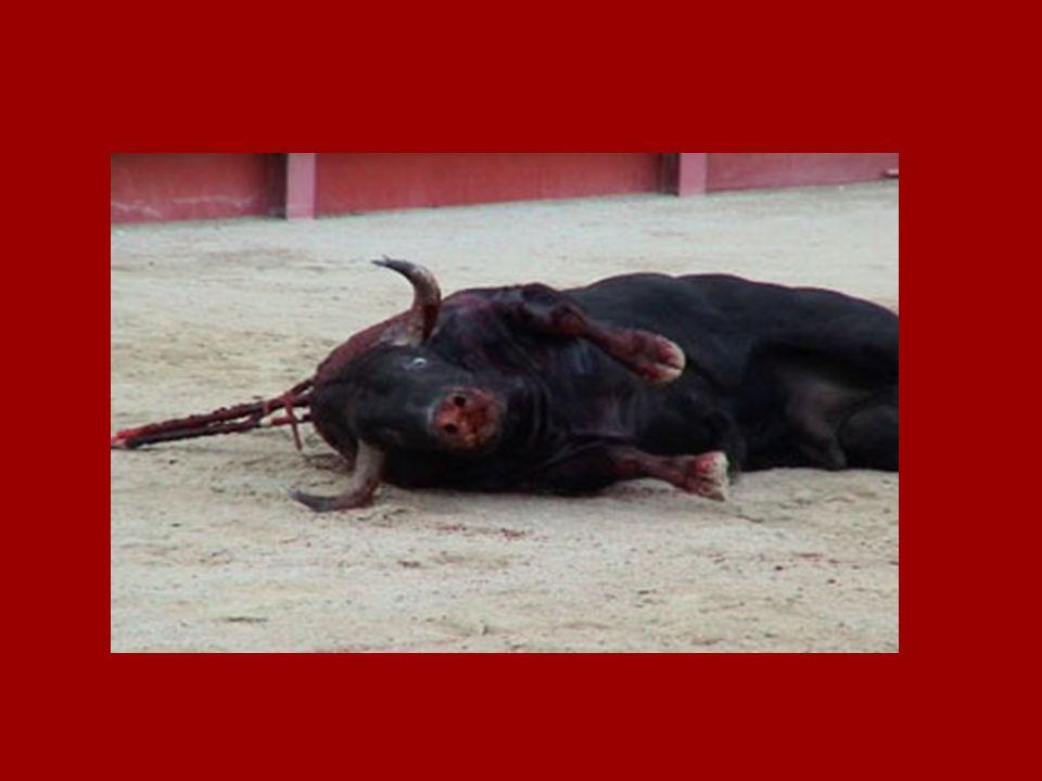 CORRIDA = TUER POUR SE DIVERTIR Jai toujours entendu dire que la corrida est un art. Ce nest pas vrai.... Cest la science de la torture Jamais dans un