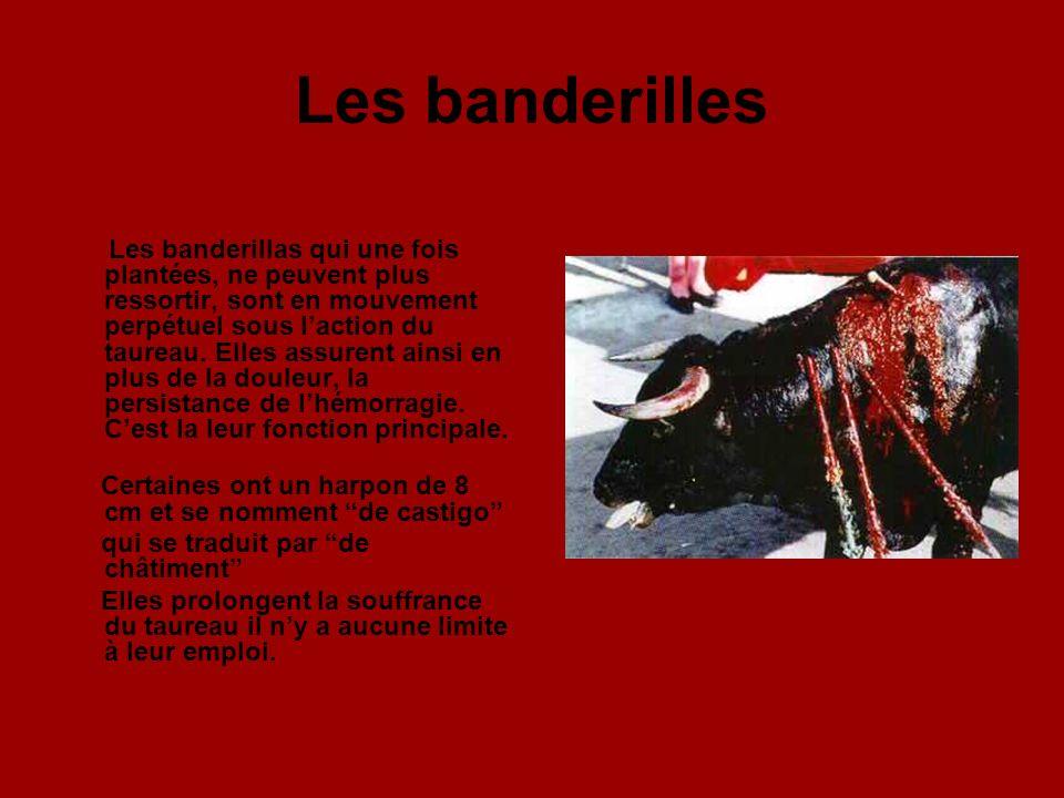 Les banderilles Les banderillas qui une fois plantées, ne peuvent plus ressortir, sont en mouvement perpétuel sous laction du taureau.