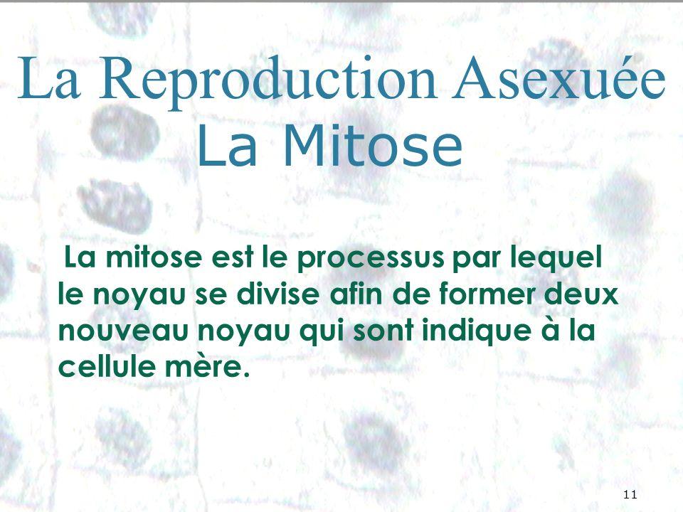 11 La Reproduction Asexuée La Mitose La mitose est le processus par lequel le noyau se divise afin de former deux nouveau noyau qui sont indique à la