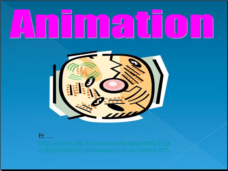 Et….. http://www.cea.fr/var/cea/storage/static/fr/je unes/animation/aLaLoupe/mitose/mitose.htm