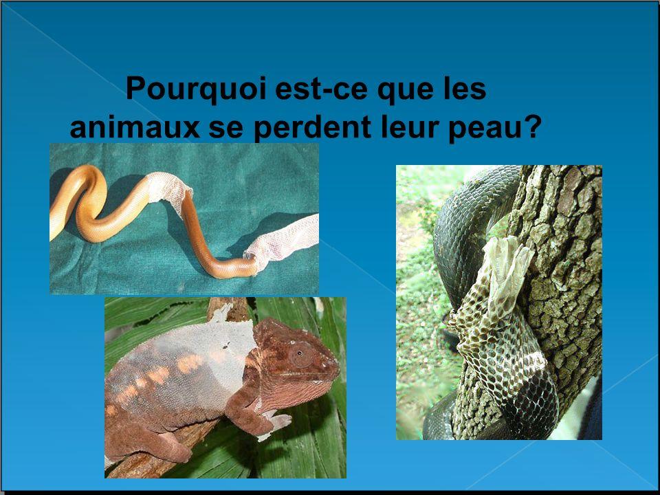 Pourquoi est-ce que les animaux se perdent leur peau?