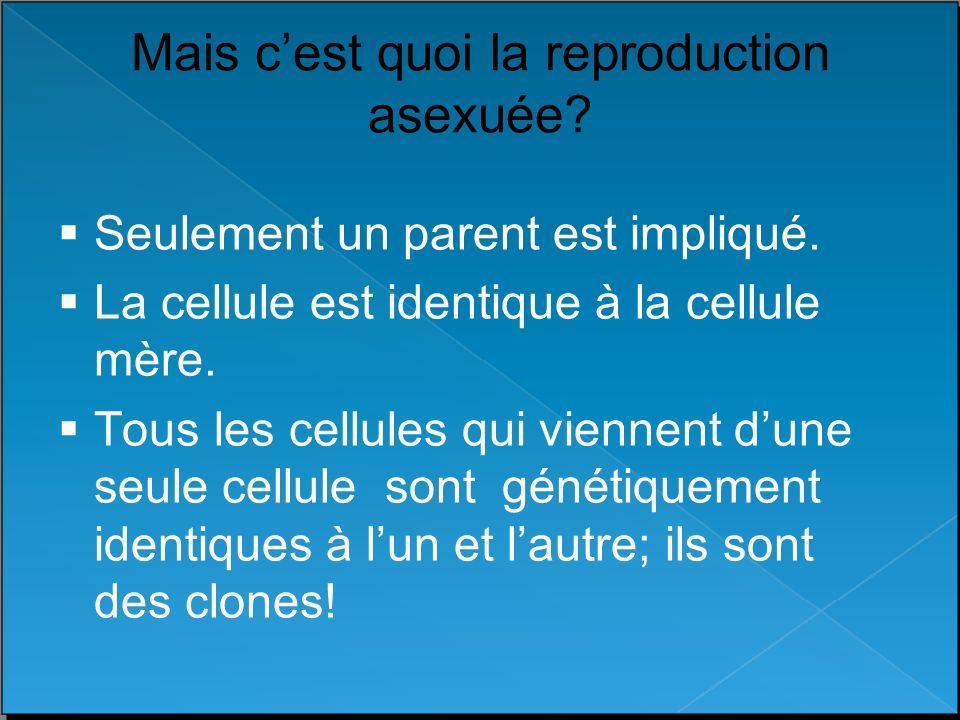Mais cest quoi la reproduction asexuée? Seulement un parent est impliqué. La cellule est identique à la cellule mère. Tous les cellules qui viennent d