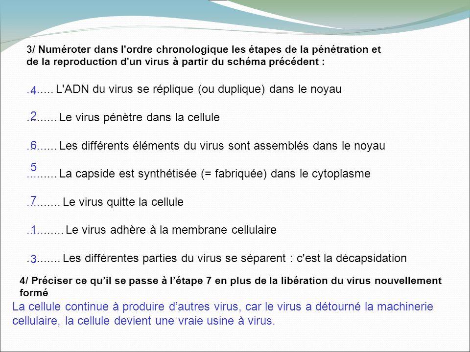 3/ Numéroter dans l'ordre chronologique les étapes de la pénétration et de la reproduction d'un virus à partir du schéma précédent :........ L'ADN du