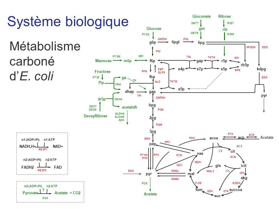 Système biologique NADH,H+NAD+ n1 (ADP+Pi)n1 ATP FADH2FAD n2 (ADP+Pi)n2 ATP RESP1 RESP2 PyruvateAcetate + CO2 n2 (ADP+Pi)n2 ATP POX .