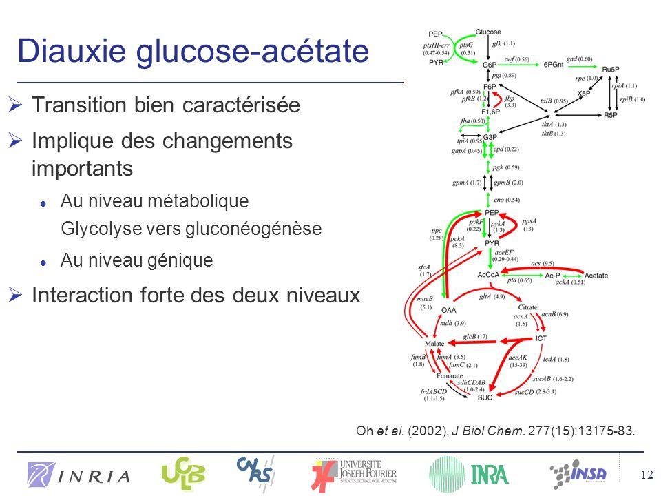 12 Diauxie glucose-acétate Transition bien caractérisée Implique des changements importants l Au niveau métabolique Glycolyse vers gluconéogénèse l Au niveau génique Interaction forte des deux niveaux Oh et al.