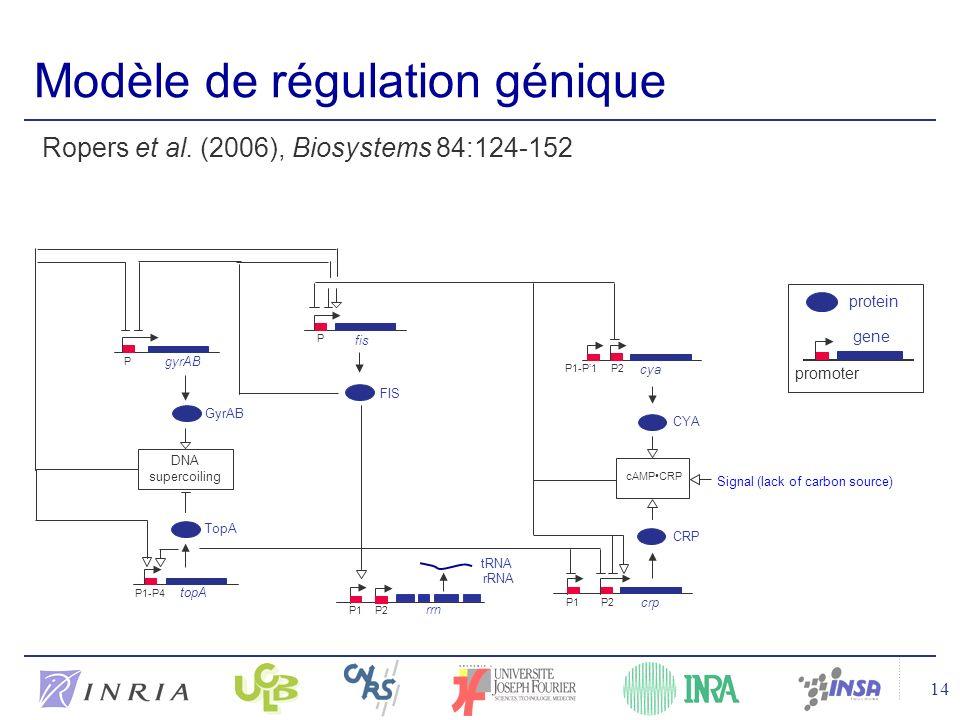 14 Modèle de régulation génique rrn P1P2 CRP crp cya CYA cAMPCRP FIS TopA topA GyrAB P1-P4 P1P2 P1-P1 P gyrAB P Signal (lack of carbon source) DNA supercoiling fis tRNA rRNA protein gene promoter Ropers et al.