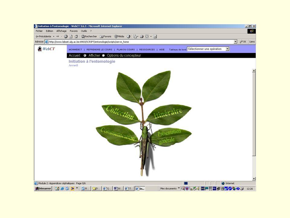Evolution dans le temps Macro Micro Motivation académique Motivation en mathématique Motivation en EAD 3 dimensions 2003-2004 2004-2005 3 répétitions 2005-2006 5 périodes 2 périodes 2-3 périodes