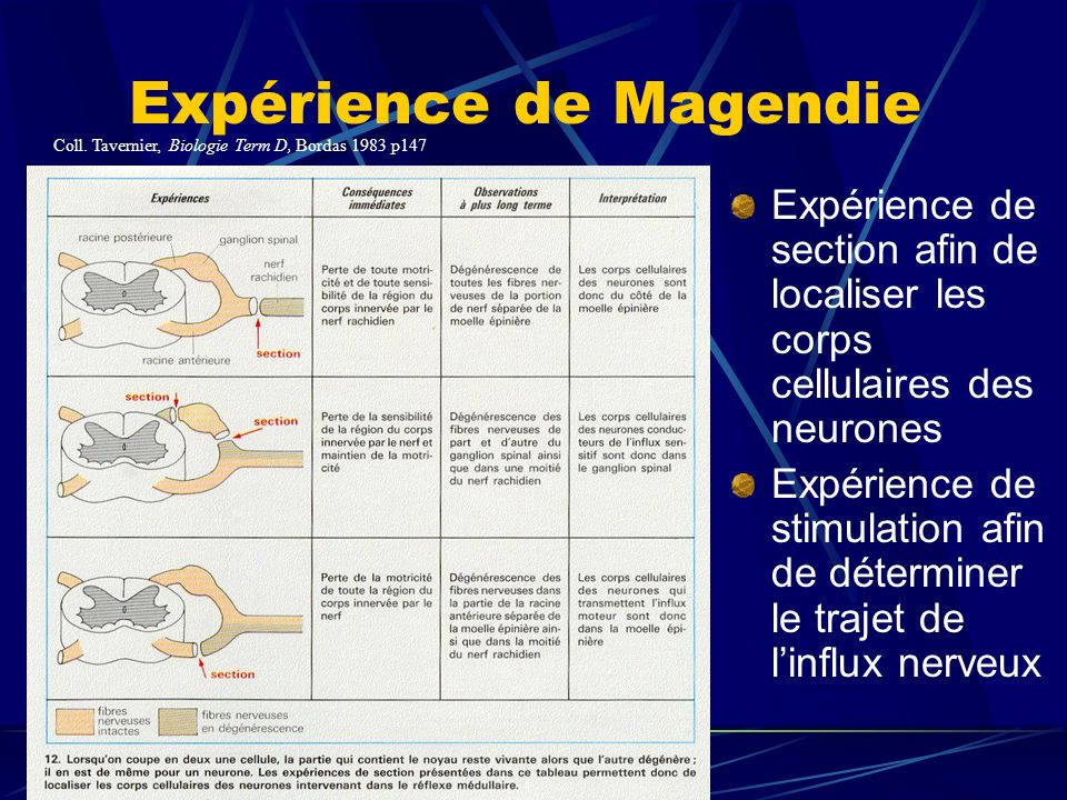 Expérience de Magendie Expérience de section afin de localiser les corps cellulaires des neurones Expérience de stimulation afin de déterminer le trajet de linflux nerveux Coll.
