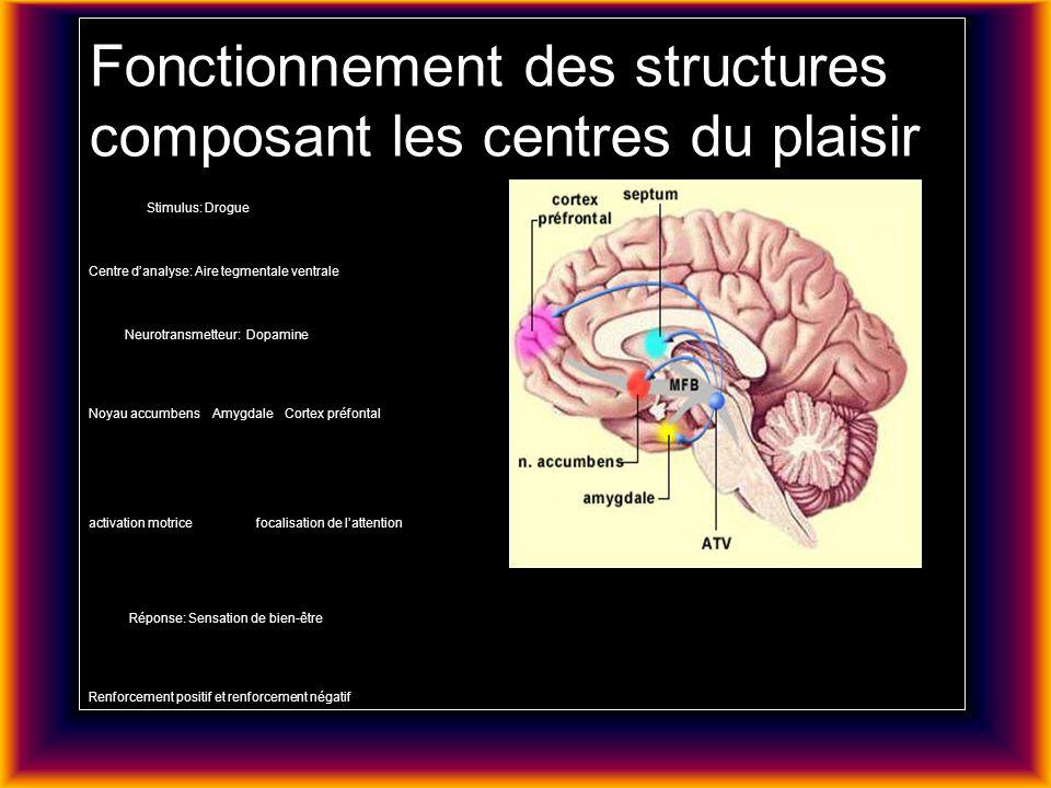 Fonctionnement des structures composant les centres du plaisir Stimulus: Drogue Centre danalyse: Aire tegmentale ventrale Neurotransmetteur: Dopamine