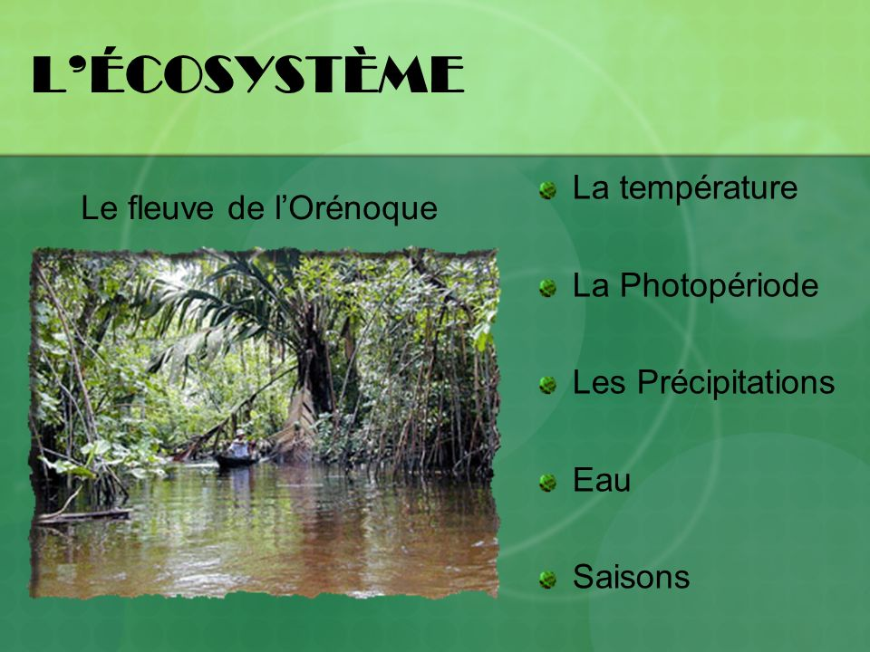 LÉCOSYSTÈME La température La Photopériode Les Précipitations Eau Saisons Le fleuve de lOrénoque