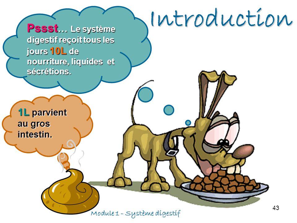 Module 1 - Système digestif 43 Pssst … Le système digestif reçoit tous les jours 10L de nourriture, liquides et sécrétions. 1L parvient au gros intest