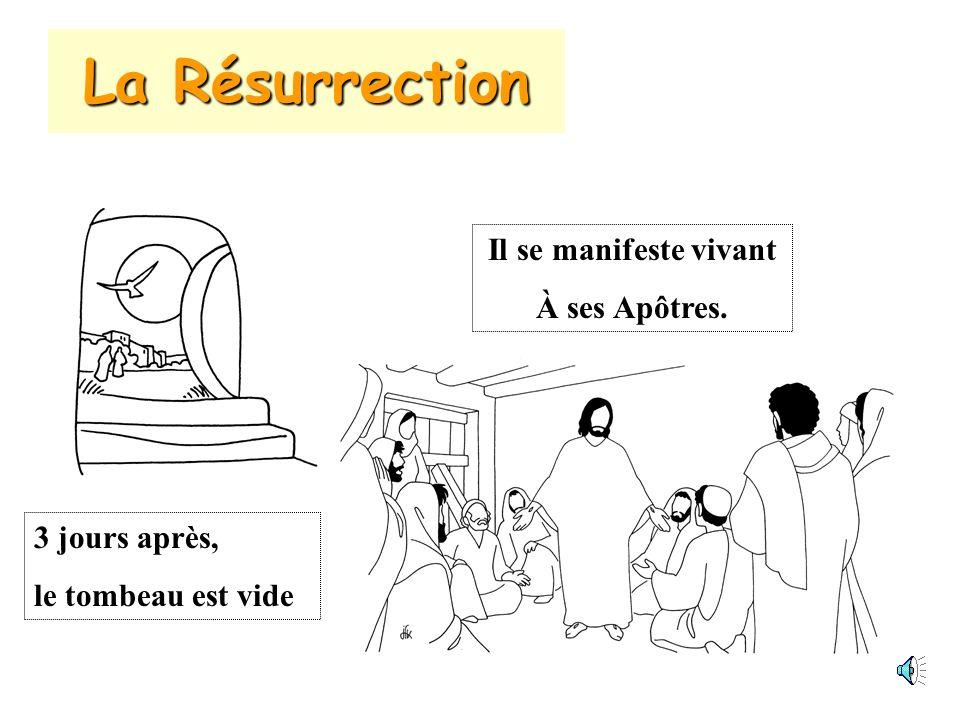 La Résurrection 3 jours après, le tombeau est vide Il se manifeste vivant À ses Apôtres.