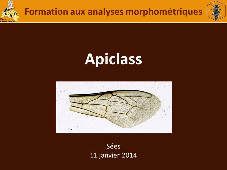 Apiclass Formation aux analyses morphométriques Sées 11 janvier 2014