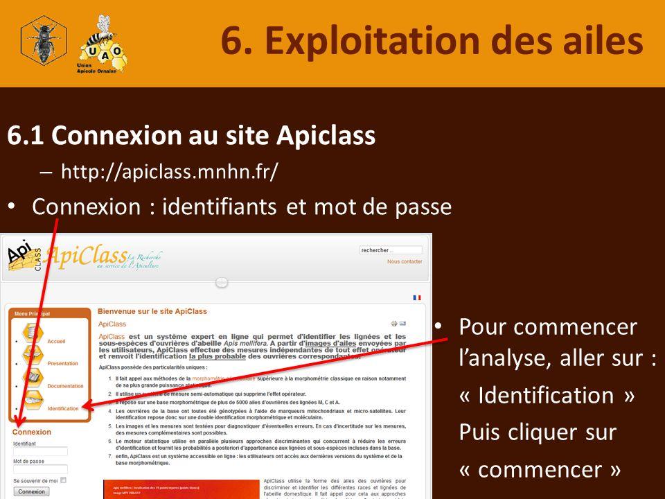 6.1 Connexion au site Apiclass – http://apiclass.mnhn.fr/ Connexion : identifiants et mot de passe 6. Exploitation des ailes Pour commencer lanalyse,