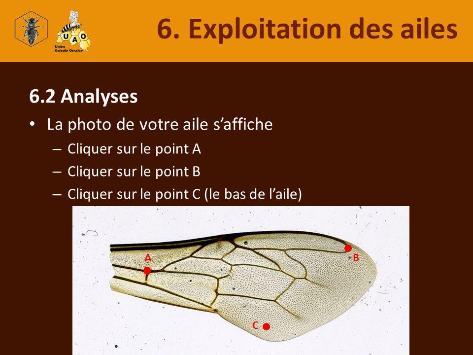 6.2 Analyses La photo de votre aile saffiche – Cliquer sur le point A – Cliquer sur le point B – Cliquer sur le point C (le bas de laile) 6. Exploitat